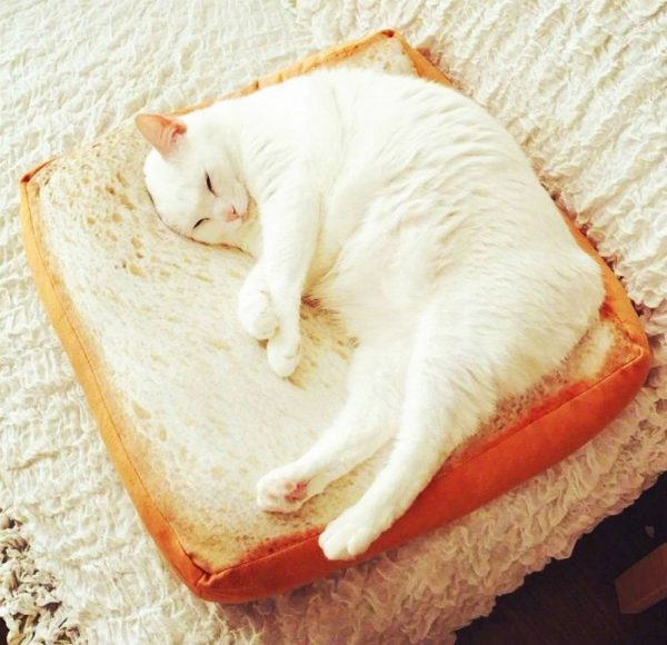 Cat Toast Bed with cat sleeping