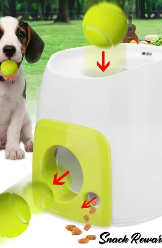 Interactive Fetch and Reward Feeder