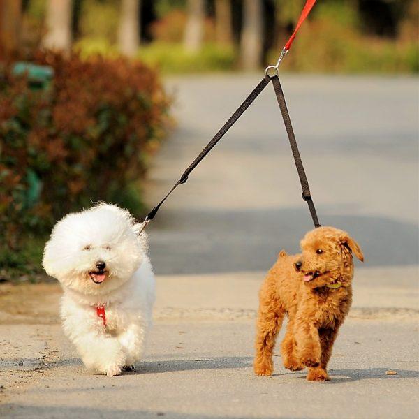 Effosola Double Dog Leash Walk Two Dogs