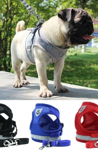 Reflective Mesh Dog Harness and Leash