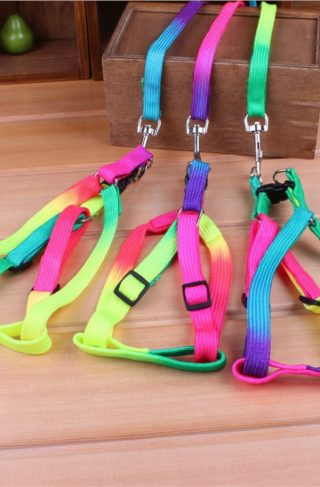 EDC Rainbow Dog Collar Harness and Leash